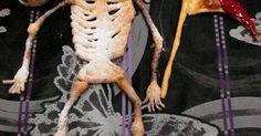 """Fabulosa receta para Calavera de hojaldre con dulce de leche. Un postre sencillo con tres ingredientes: masa de hojaldre, azúcar glas y dulce de leche. Lo que lleva un poquito de tiempo es recortar las partes de la calavera pero se cocina en 15 minutos por lo que en menos de una hora tendrás un postre irresistible y terrorífico para celebrar halloween. El glaseado que puse en la guadaña me sobró del """"pastel sangriento halloween"""" preparado hace unos días, por eso lo añadí a la recet..."""