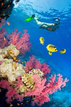 25 Most Beautiful Places Around The World To Go Snorkelling just being under water with fish and things freaks me out a lot Morejust being under water with fish and things freaks me out a lot . Great Barrier Reef, Snorkeling, Dream Vacations, Vacation Spots, Maui Vacation, Hanauma Bay, Places To Go, Places To Travel, Grand Cayman