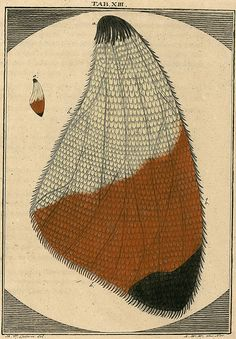Amusement microscopique MF Ledermuller 1766