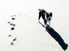 Sadie's Prints in Sand