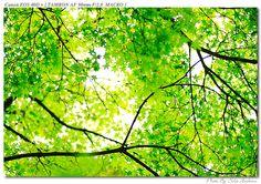 木漏れ日 - Google 検索
