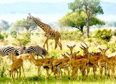 Mikumi National Park 1 Night 2 Days Africa safari
