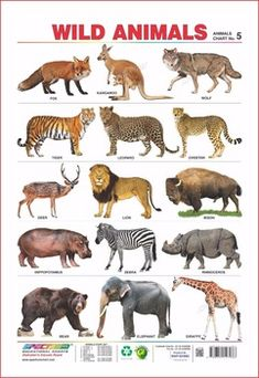 domestic animals chart free download - Google Search