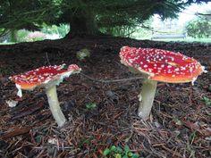 Sheffield park #mushrooms #autumn #magic