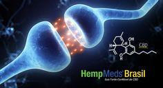 """A relação entre Endocanabinoides e Fitocanabinoides – Endocanabinoides são lipídios endógenos (produzidos pelo próprio organismo) que ativam os receptores canabinoides CB1 e CB2 para obter respostas químicas e assegurar que estes processos permaneçam em homeostase – dos termos gregos homeo, """"similar"""" ou """"igual"""", e stasis, """"estático"""" – ou seja, o ambiente interno em equilíbrio. Conforme necessário, o corpo naturalmente sintetiza e inativa estes canabinoides..."""