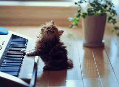 Meet The Cutest Kitten In The World 2