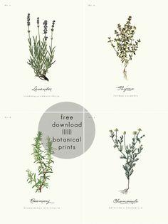 a daily something: free printable   botanical prints 01