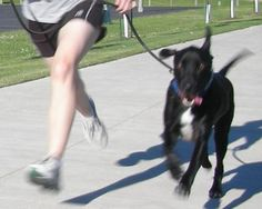 How to run with a dog       by Lindsay Stordahl on May 18, 2011