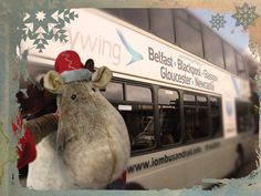 Our office reindeer went 'on the buses' as he travels the Island searching for a new home