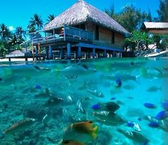 Over-the-water bungalows, crystal clear water, and water life a plenty.  Bora Bora.
