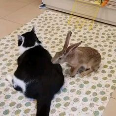 Cute Baby Bunnies, Cute Kittens, Cats And Kittens, Bunny, Big Cats, Funny Animal Memes, Funny Animal Pictures, Funny Cats, Cute Little Animals
