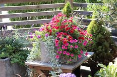 Sabelhagens olivlund : Hortensia och en välkomnande entré