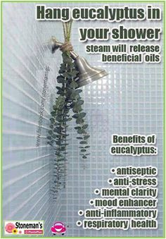 A great use for eucalyptus