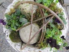 pense planteringar i kruka - Sök på Google