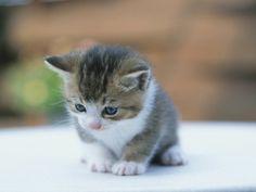 Gatos Bebes Bonitos Y Tiernos