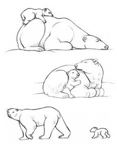 how to draw a polar bear - Google Search
