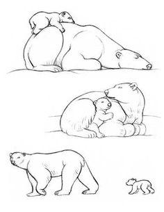 how to draw a polar bear - Google Search