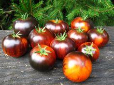 Ananas Bleue tomato Secretseedcartel.com