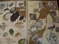 Art Sketchbook - observational drawings of organic forms // Art student portfolio