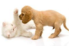 Chaton et chiot jouant ensemble, spectacle adorable !