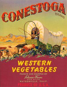 Conestoga Brand Western Vegetables, Watsonville, CA.