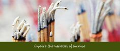 Explore the varieties of incense!