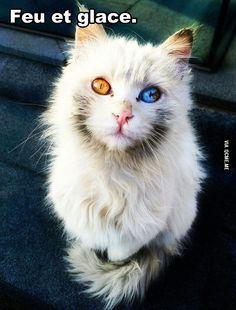 Le plus beau chat du monde