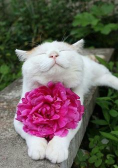 There is nothing more soothing than having a happy cat, curled up on your lap purring gently, and as cat owners, we all want our cats to be happy. top 6 signs of a happy cat. I Love Cats, Crazy Cats, Cute Cats, Funny Cats, Funny Animals, Cute Animals, Baby Animals, Adorable Kittens, Wild Animals