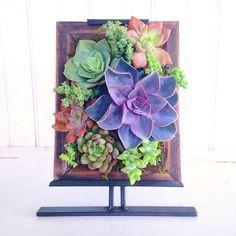 . Succulent Frame, Vertical Succulent Gardens, Planting Succulents, Cacti, Container Gardening, Decorating, Amazing, Outdoor Decor, Plants