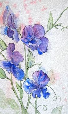 Sweet Pea Vine watercolor | Sweet Pea sketch, 6″ x 9.5″ watercolor painting