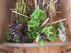 easiest way to dry herbs