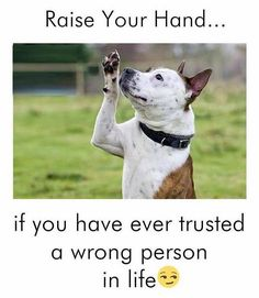 #indogswetrust #dogsbeforehumans #mostloyal #doggies #whatspup #whatspupdoggies