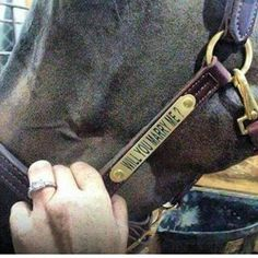 Proposing AND a new leather halter? Really, how do men this great even exist. Love incorporating animals into the proposal! Will you marry me Southern proposal Country proposal Horse Girl, Horse Love, Equestrian Quotes, Equestrian Girls, Equestrian Problems, Horse Wedding, Dream Wedding, Perfect Wedding, Leather Halter
