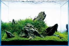 iwagumi aquascape - Google Search