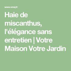 Haie de miscanthus, l\'élégance sans entretien | Un, 39;? and Sans