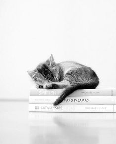 My two most favorite things in life: cats and books!!!!  Books about Cats!!!!!