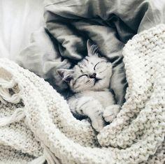 Imagen de cat, animal, and kitten