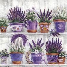 lawenda w doniczce - Szukaj w Google - Gardening And Patio