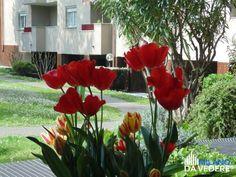 Natura #milanese  #milanodavedere #Milano #incomingmilano #igersmilano  www.milanodavedere.it