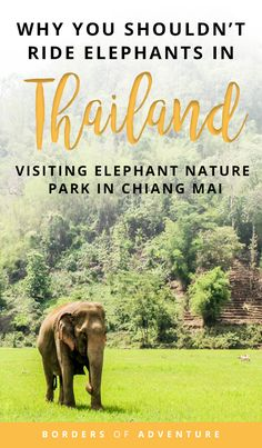 Why Riding Elephants in Thailand is Wrong – Visiting Elephant Nature Park, Chiang Mai Elephant Nature Park, Elephant Ride, Thailand Travel Guide, Asia Travel, Thailand Destinations, Travel Destinations, Travel Advice, Travel Tips, Travel Guides