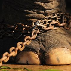The Netherlands are the 3rd country in europe to ban wild animals in circuses.  'Here,here!'
