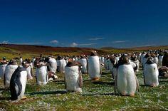 Los pingüinos contra el volcán