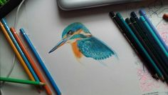 kingfisher in progress