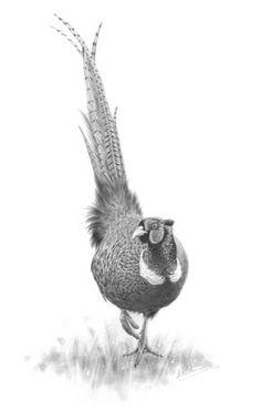 Nolon Stacey Wildlife Artist: British Wildlife