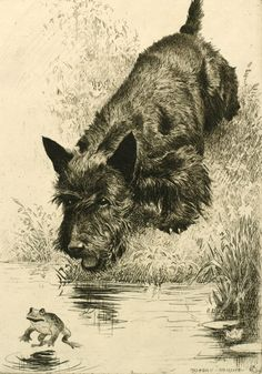 """Dry-point etching """"Scram!"""", a Scottish Terrier chasing a frog by Morgan Dennis (American, 1892-1960)"""