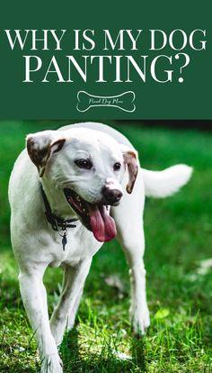 Why Is My Dog Panting? | Dog Health | Dog Behavior | Dog Care Tips