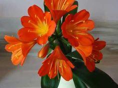 Χρώματα και αρώματα -Chris Pap. - YouTube Youtube, Plants, Flora, Youtubers, Plant, Youtube Movies