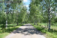 Björkallé - Puistokuja