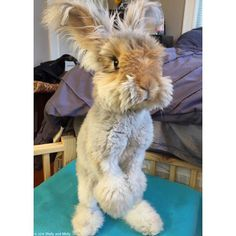 Wally is taking a stand today. It's difficult to celebrate a fluffy bunny when…