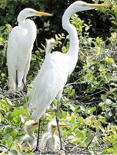 passaros-pantanal-Brasil